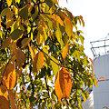 写真: 紅葉と発酵タンク