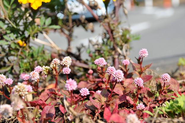 奥多摩花壇