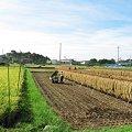 Photos: 実りの秋・稲架掛け風景:2007_0917_A540_013