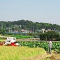 Photos: 実りの秋・かくも歓ばしき:2007_0922_A540_IMG_0916