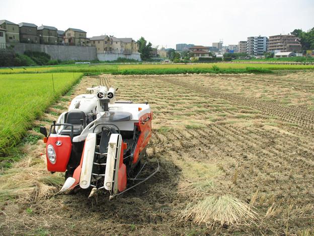 収穫・大地の恵み。2008_0914_pwsA640_IMG_3547