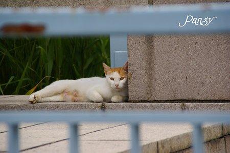 ここがお気に入りなの・・公園の猫さん・・
