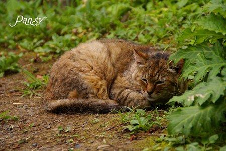 起しちゃったかな~ 三渓園の猫さん・・