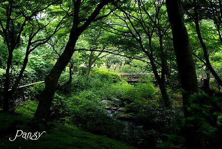 緑の散歩道・・