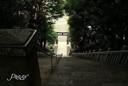出世の階段・・ 芝さんぽ~17