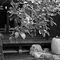 Photos: つくばいのある坪庭・・