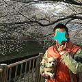 Photos: お父さんとお花見