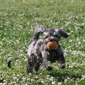 Photos: 走り回って