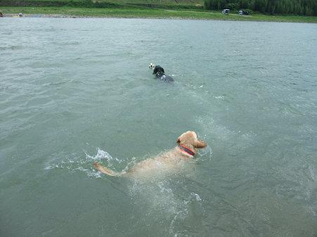 ずっと泳ぐ・・・