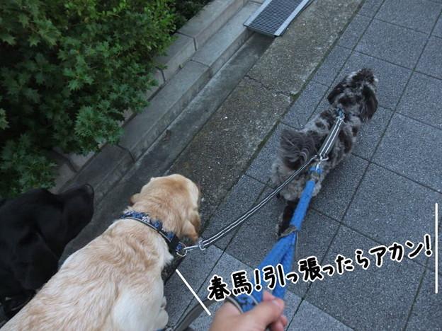 Photos: アカン!