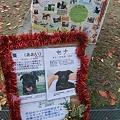 Photos: まきまきブッキン&募集の子