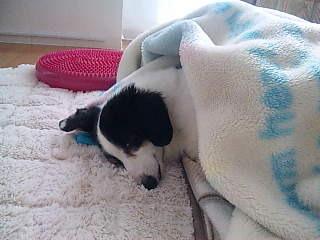 眠り王子キット