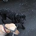 Photos: 落ちてくる雪を追いかける犬達