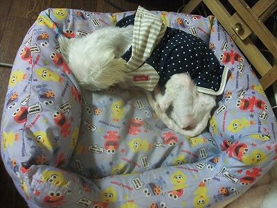 Photos: ずっと寝たまんま・・・