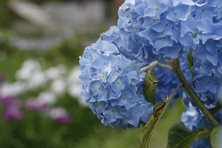 柳生花しょうぶ園 - 09