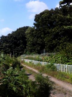 Summer Dream 13 - 市民菜園