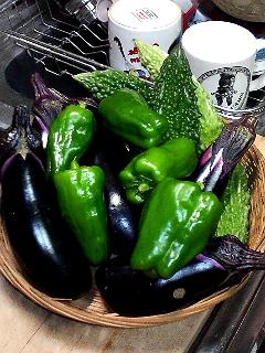 Summer Dream 29- 菜園で採れた新鮮野菜