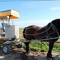 Photos: お馬さん