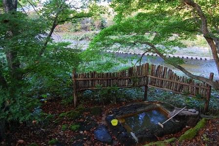 アカシアの木で目隠し用の柵を造った