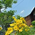 Photos: 今日撮った花の名前を僕は知らない・・・・・何だっけ?