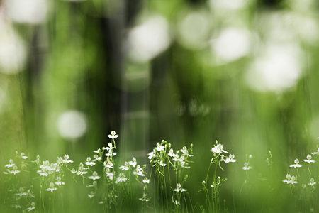 鷺草のメロディ