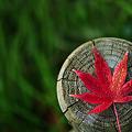Photos: 季節の色