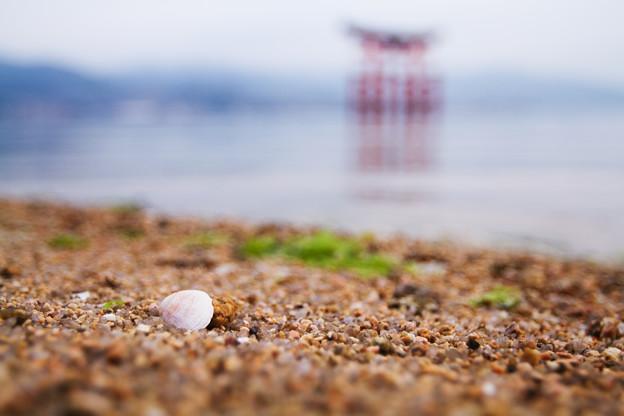 貝のある浜