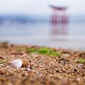 写真: 貝のある浜