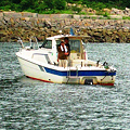 Photos: 夏の釣り客