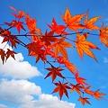 深まる秋の色