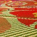 ただ今20万本のチューリップで花絵中 in 世羅高原