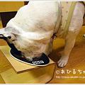 写真: 20110530_08