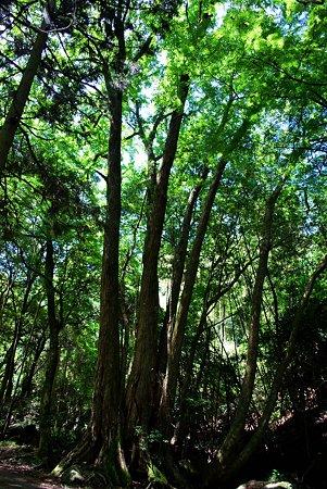 木漏れ日の五滝3