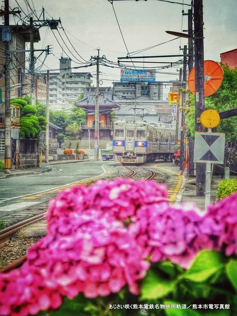 Photos: あじさい咲きほこる併用軌道。