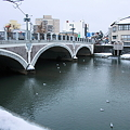 浅野川大橋とユリカモメ