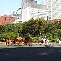 Photos: 馬車が行く3