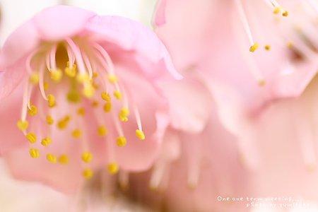 春のシャワー