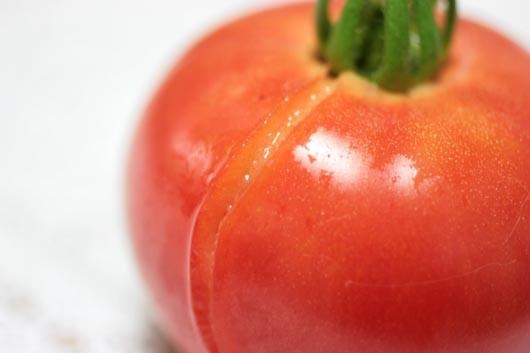 トマト雨上がりで割れました