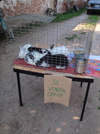 カルロス・キーン(売られていたウサギ)