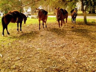 馬が彼らの交通手段