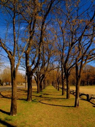 並木のある風景