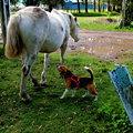 Photos: 愛犬と馬