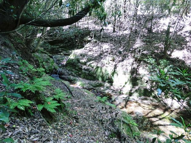 縦走路横を流れる谷川に出た