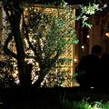For two III ・・・ 2010 Christmas of Tokyo ??