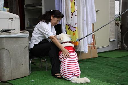 保護犬時代に散々お世話になったKさんにお礼参り…じゃなくてご挨拶