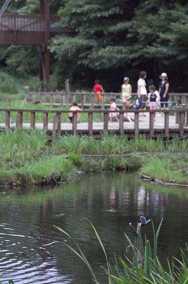 写真: 泉の森 06