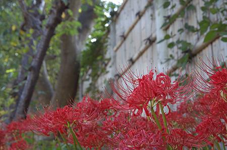 秋の鎌倉 18