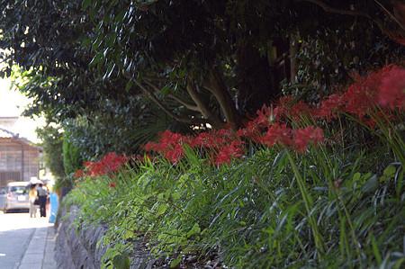 秋の鎌倉 20