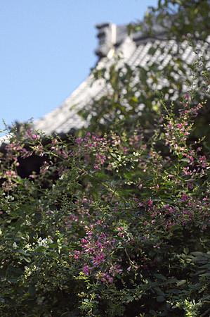 秋の鎌倉 25