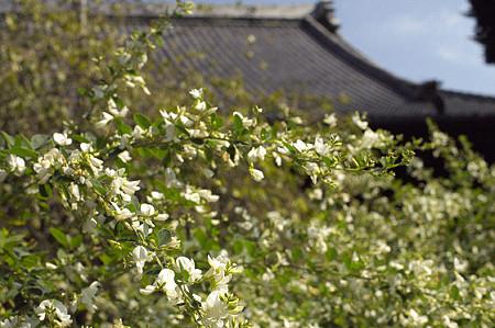 秋の鎌倉 28